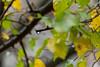 Spain - Granada - Monachil - Los Cahorros Footpath (Marcial Bernabeu) Tags: marcial bernabeu bernabéu spain españa andalucia andalucía andalusia granada monachil cahorros loscahorros sendero footpath path trail autumn fall otoño drop gota vegetacion vegetación vegetation