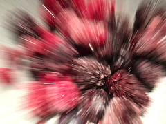 Berry Burst (jawsnap.photo) Tags: berries berry blackberry blueberry bowl food frozen kitchen motion raspberry zoom project365 wwwjawsnapnet jawsnap
