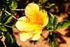 2012-07-01_Crete_000955 (l0pht) Tags: crete mediterraneansea sea coastline flowers
