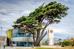 _DSC6921a (_nomoli_) Tags: nz nouvellezélande newzealand paysage landscape christchurch newbrighton