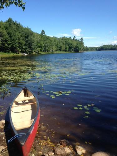 Travel Pond - www.amazingfishametric.com