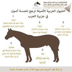 الخيول العربية الأصيلة ترجع لخمسة أصول في جزيرة العرب .. تعرف عليها .. #riyadh #Fas #riyadh #horses #actvity #الرياض #اليوم #good_evining #جدة #حصان #خيل #مربط #اسطبل (FAS_Arabian_horse) Tags: riyadh fas horses actvity الرياض اليوم goodevining جدة حصان خيل مربط اسطبل