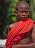 Young Monk in Training (David Rosen Photography) Tags: monk buddhist sri lanka asia portrait people travel boy orange colour religion 200ml28prime