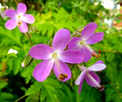 Friday Flower  have nice day (sabine1955) Tags: flower blossem blüte natur lila grün