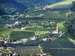 Vineyards in Val Passiria, Explored, best # 51 on Feb. 28, 2017 (presbi) Tags: landscape panorama vigneti vineyards altoadige sudtirol valpassiria passeiertal italy italia