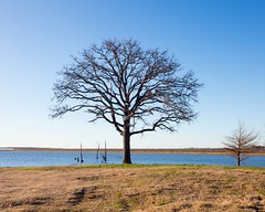 Lake Fork Lookout (Ollie girl) Tags: tree leafless lake fork texas water sky blue