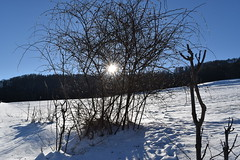 PHO_0140 (Dimi_M) Tags: neige soleil nature foret