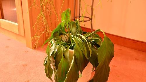 Pflanze + H2O