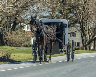 Honey Brook Pa. Amish