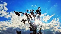 20150703_181200.arw (B.Krumov) Tags: sun clouds lg g3 sunnytree d855 kardzhali lgg3