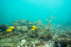 20150926-DSC_6321.jpg (d3_plus) Tags: sea sky fish beach japan scenery underwater diving snorkeling  shizuoka    apnea izu j4           nikon1 togai  1030mm nakagi  1   1030mmpd wpn3