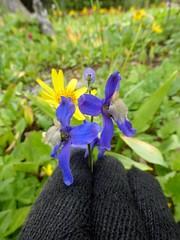 7-093 (Gnarlene) Tags: flower hiking banff healypass monarchramparts