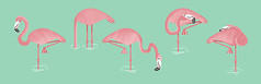 Flamingos! (James Loram) Tags: pink sleeping art illustration digital print james eating flamingo flamingos loram grpahic