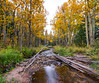 Stream and Color (PT Photo) Tags: autumn fall colorado aspens hdr rockymountainnationalpark sigma1020mm vertorama dphdr ptphoto canon70d lightroom5 pse12
