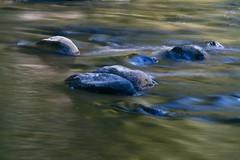 Butte Creek 12 (highcountry2006) Tags: runningwater sierranevadas mountainstream buttecounty buttecreek