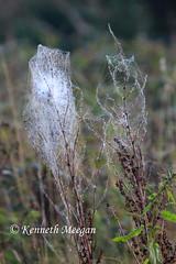 Tangled Web (Ken Meegan) Tags: ireland web spidersweb tinternabbey cowexford tangledweb saltmills