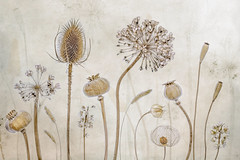 Autumn fruits (Mandy Disher) Tags: autumn seeds poppy pods papaver seedheads chineselantern teasle physallis