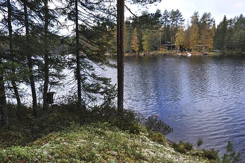 Punkaniemi, UPM:n hakkuun uhkaamaa metsää ja maisemaa