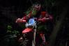 No roads around here (Enrico.mate - Foto/Grafico) Tags: trees red green nature grass forest dark nikon cross mud ground natura motorbike moto driver terra rosso mata enduro bosco foresta 18105 motociclista rossa fango oscurità d3200 18105vr nikonclubit