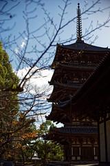 NARA (gasdust) Tags: sony nara 奈良 奈良公園 興福寺 a99 sal135f18za slta99v
