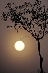 foggy morning_#2 (bn93037) Tags: sigma apo f45 500mm