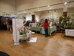 P1100039 (cieneguitan) Tags: flora lan bunga orkid okid angrek anggerek