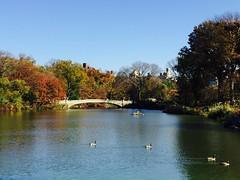 The Lake #centralparknyc (luxurytravelbroker) Tags: centralparknyc