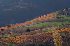 PPL-S48- la vie est belle - l'automne dans le Beaujolais du ct de Vaux en Beaujolais. Autumn in  Beaujolais France (zabou256 aussi sur Ipernity) Tags: autumn colors automne couleurs country herbst vine ppl checkerboard farbe vignes weinstock damier projetphotodeslumires