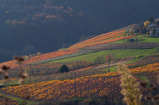 PPL-S48- la vie est belle - l'automne dans le Beaujolais du côté de Vaux en Beaujolais. Autumn in  Beaujolais France #explore