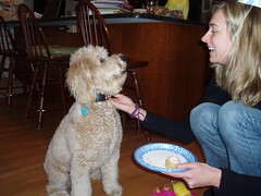 yay--birthday-cake-for-me--millie-turned-1-on-new-years-day--shes-one-of-lilly-and-chewys-girls-_4235274673_o