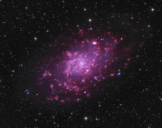 Spiral galaxy M33 in narrowband