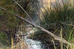 California Wetland (rschnaible) Tags: california wild usa west wet water grass landscape us pond outdoor western land