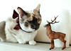 (Sandra Londono) Tags: cats adorable kittens gatos lovely dear beautifulcats httpsinstagramcomthemeowwhiskers