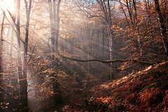 Magic Forest (Gure Elia) Tags: backlight forest contraluz landscape bosque euskalherria navarra nafarroa bertiz baztán hazdeluz canoneos550d