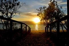 DSC_0001 (2) (RUMTIME) Tags: morning light tree sunrise queensland coochie coochiemudlo