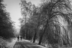 Baldeneysee | Essen | Germany (Photofreaks [Thank you for 2.000.000 views]) Tags: essen ruhr ruhrgebiet deutschland germany nrw nordrheinwestfalen northrhinewestphalia ruhrmetropolis kohlenpott ruhrpott adengs wwwphotofreakseu herbst autumn fall leaf leaves blatt blätter laub baum bäume trees foliage wald wälder forests baldeneysee