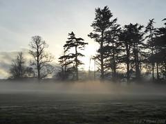 Mist forming (ExeDave) Tags: p1020902 powderham park kenton teignbridge devon sw england gb uk parkland landscape mist afternoon evening sun sunlight rays trees silouettes