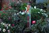 peace (greenelent) Tags: garden peace love nature manhattanbeach ca california flowers 365 photoaday