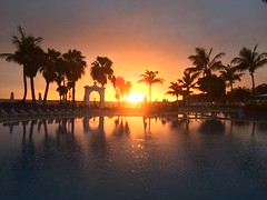 Sunset chasing (markshephard800) Tags: swimmingpool pool water palms orange sunlight hate trees palmtrees sun sunset peaceful peace bliss