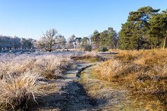 Frozen fog (Pieter ( PPoot )) Tags: npdwingelderveld frozen fog bevroren mist