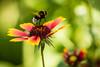 landing (grandenstor) Tags: balatonalmádi kert virág