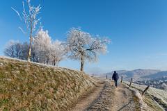 A9900877_s (AndiP66) Tags: winterstimmung altbüron melchnau luzernerhinterland rottal kanton luzern cantonoflucerne bern cantonofberne nebel fog mist gefroren reif frosted frozen hoarfrost sun sonne sunrays sonnenstrahlen hills hügel winter sony sonyalpha 99markii 99ii 99m2 a99ii alpha ilca99m2 slta99ii sigma24105mmf4dghsmart sigma 24105mm f4 amount andreaspeters