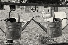 Oxford / England: Wolvercote cemetery. Watering cans (wwwuppertal) Tags: oxford oxfordshire england greatbritain grosbritannien wolvercotecemetery friedhof graveyard gieskannen wateringcans burialsite burialground buryingground boneyard monochrome monochrom sw schwarzweis bw blackandwhite noiretblanc blancetnoir getont toned tonung toning fujifilmxpro1 fujinonxf35mmf2rwr fujifilmxsystem uk unitedkingdom vereinigteskönigreich
