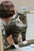 You've got to be kidding! (Yuri Dedulin) Tags: cat show cute beautiful animal pet fur portrait mammal furry hair pretty domestic parsippany sheraton fun weekend