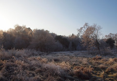 2016_12_0595 (petermit2) Tags: winter frost clumberpark clumber sherwoodforest sherwood nottinghamshire nationaltrust nt