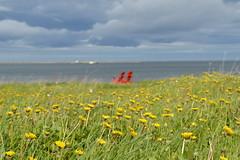 Rocky Harbour Vista (Tabby Fan) Tags: grosmornenationalpark rockyharbour newfoundland redchairs dandelions greyskies