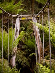 "Suspension bridge • <a style=""font-size:0.8em;"" href=""http://www.flickr.com/photos/44919156@N00/32284788710/"" target=""_blank"">View on Flickr</a>"