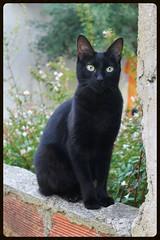 Black beauty (GabyF88) Tags: cat gato black negro earlymorning summer vacations