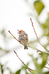 House Finch. (LisaDiazPhotos) Tags: lisadiazphotos bird watch birdwatching birdwatch house finch