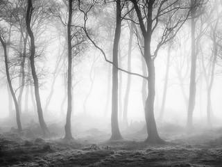 Trees, Great Salkeld